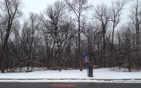 Woods behind school