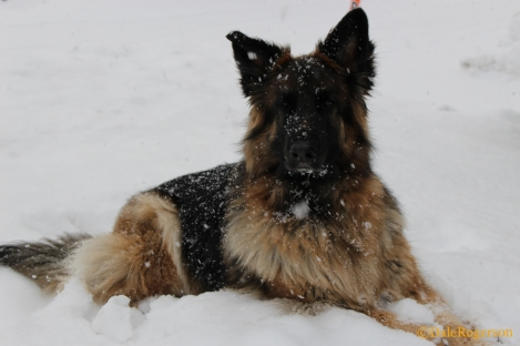 Waiting in the snow