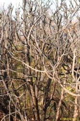 Spooky hedge