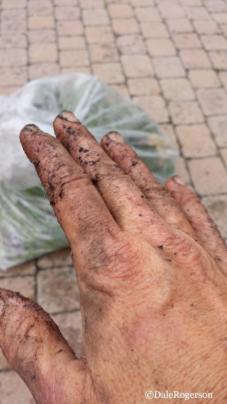 Gardener's hands