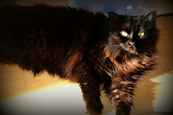 Moondust, the lazy cat