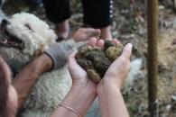Handful of black truffles