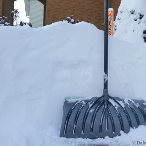 Almost as high as the shovel!