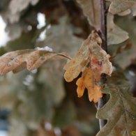 Rustling leaves