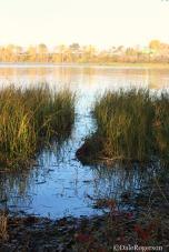 Swamp-like