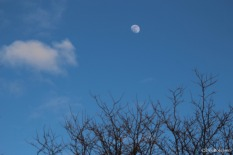 The moon at daytime