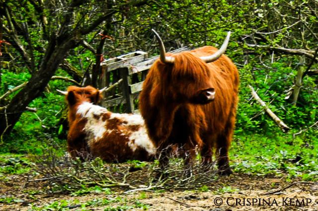 https://dalectables.files.wordpress.com/2020/05/horned-cattle.jpg