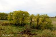African Serengeti Steppe Vibe