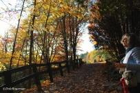 Path to the tea house