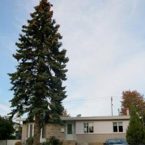Bye-bye old tree