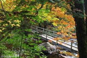 Bridge to path